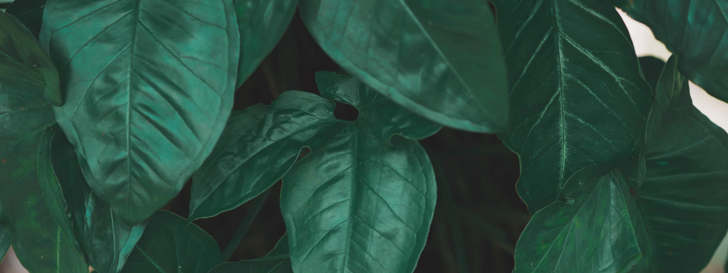 A close up of several darker leaves