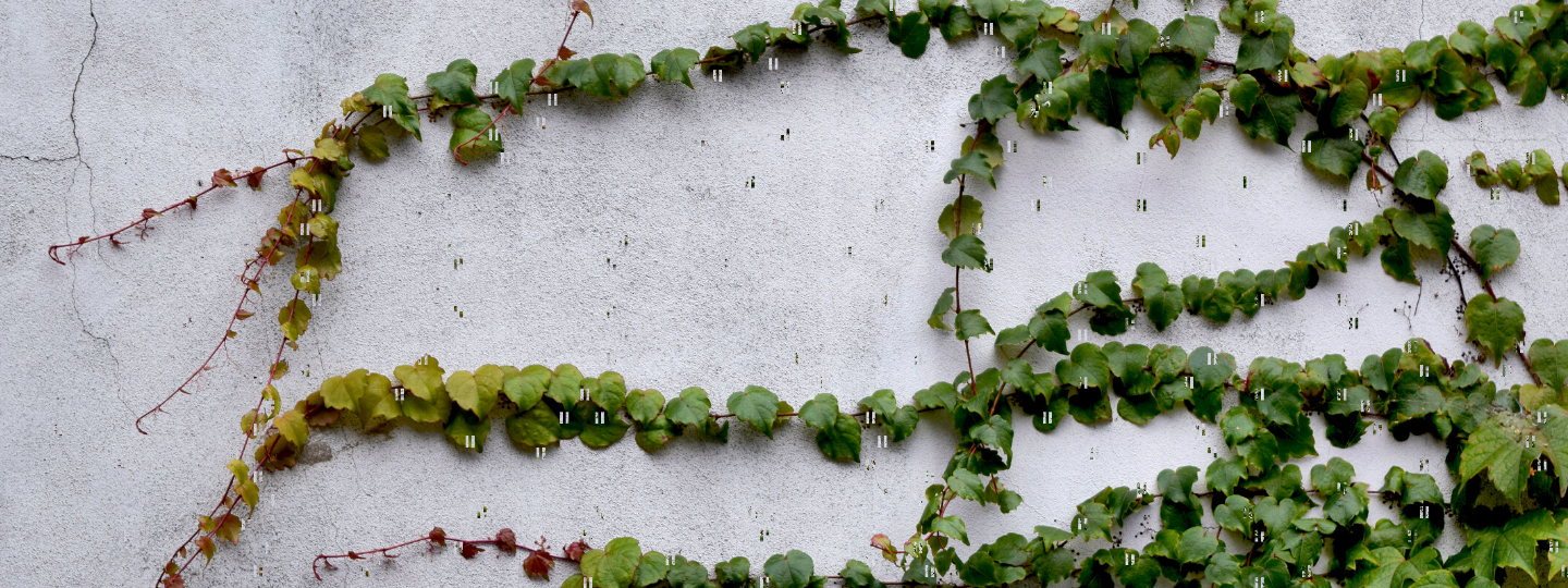 vines on a cement wall growing in one direction